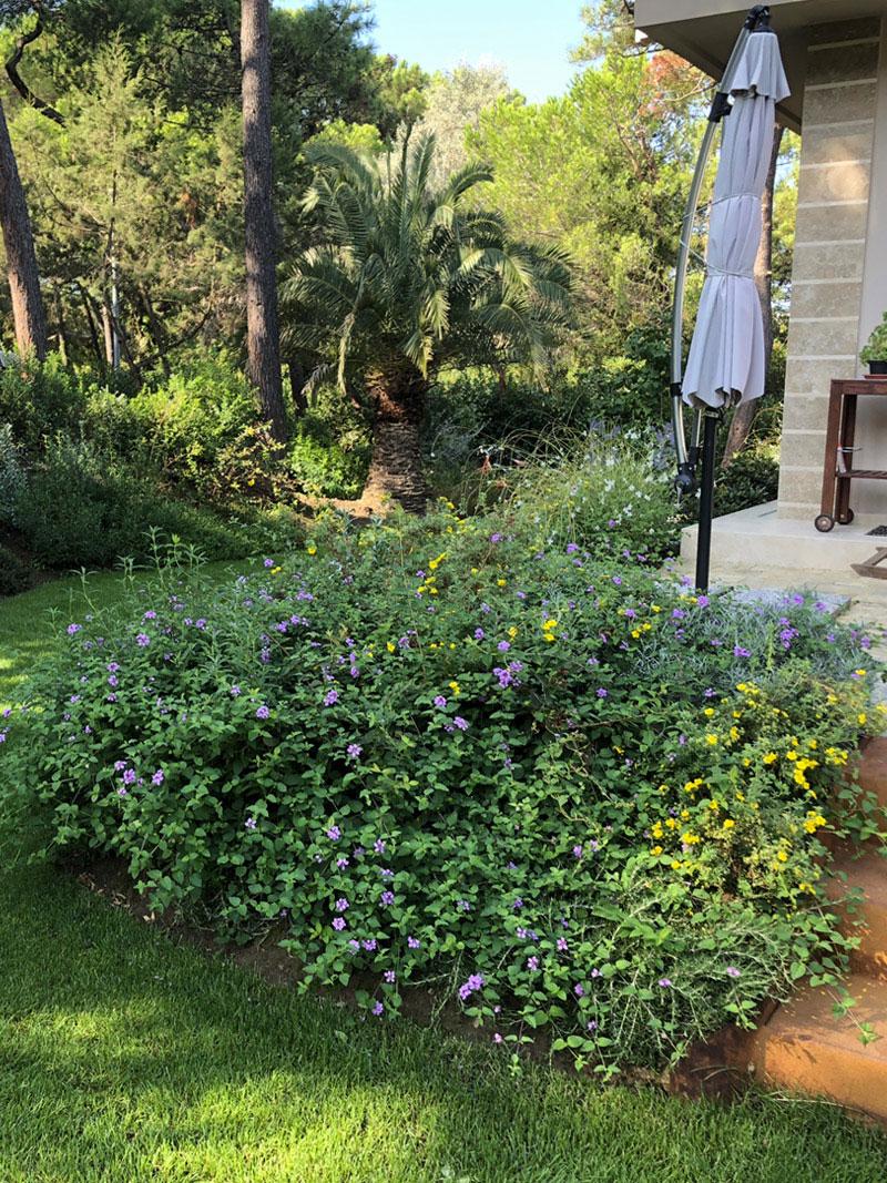 progetto-verde-realizzazione-giardino-senza-acqua-Toscana