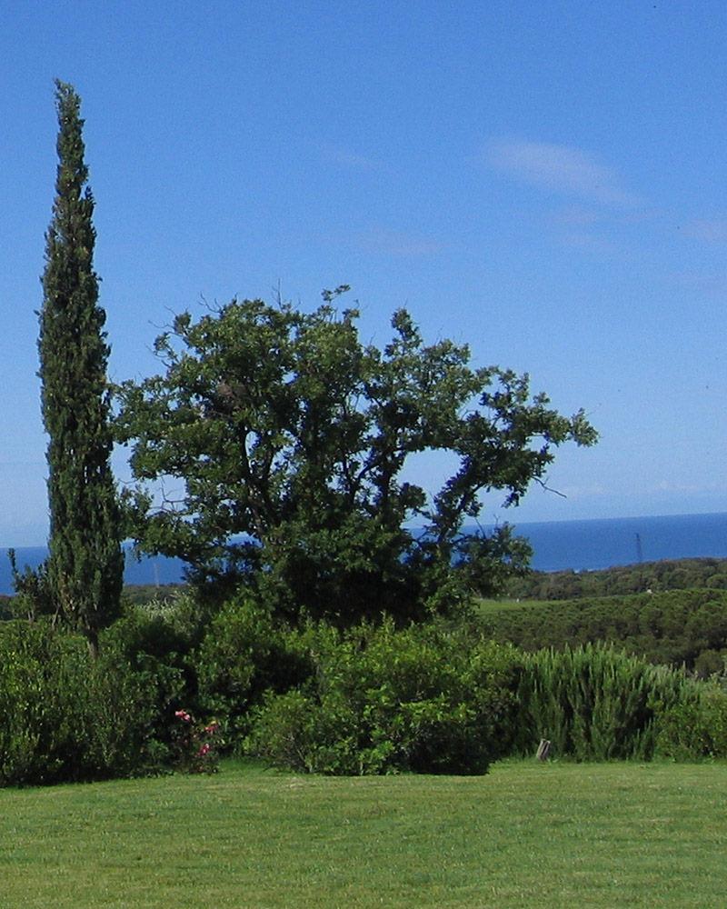 giardino-sostenibile-benefici-ambiente