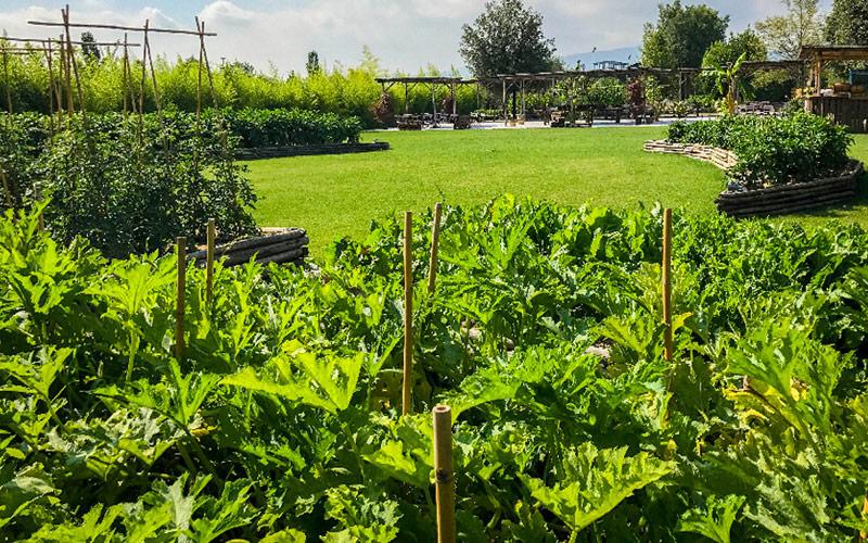 orto-giardino-progetto-manutenzione-MATI-1909