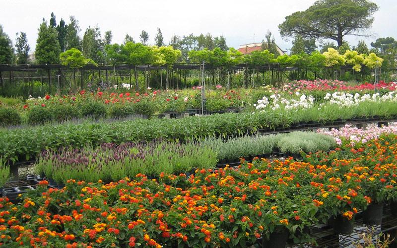 piante-ornamentali-da-frutto-alberi-per-giardini